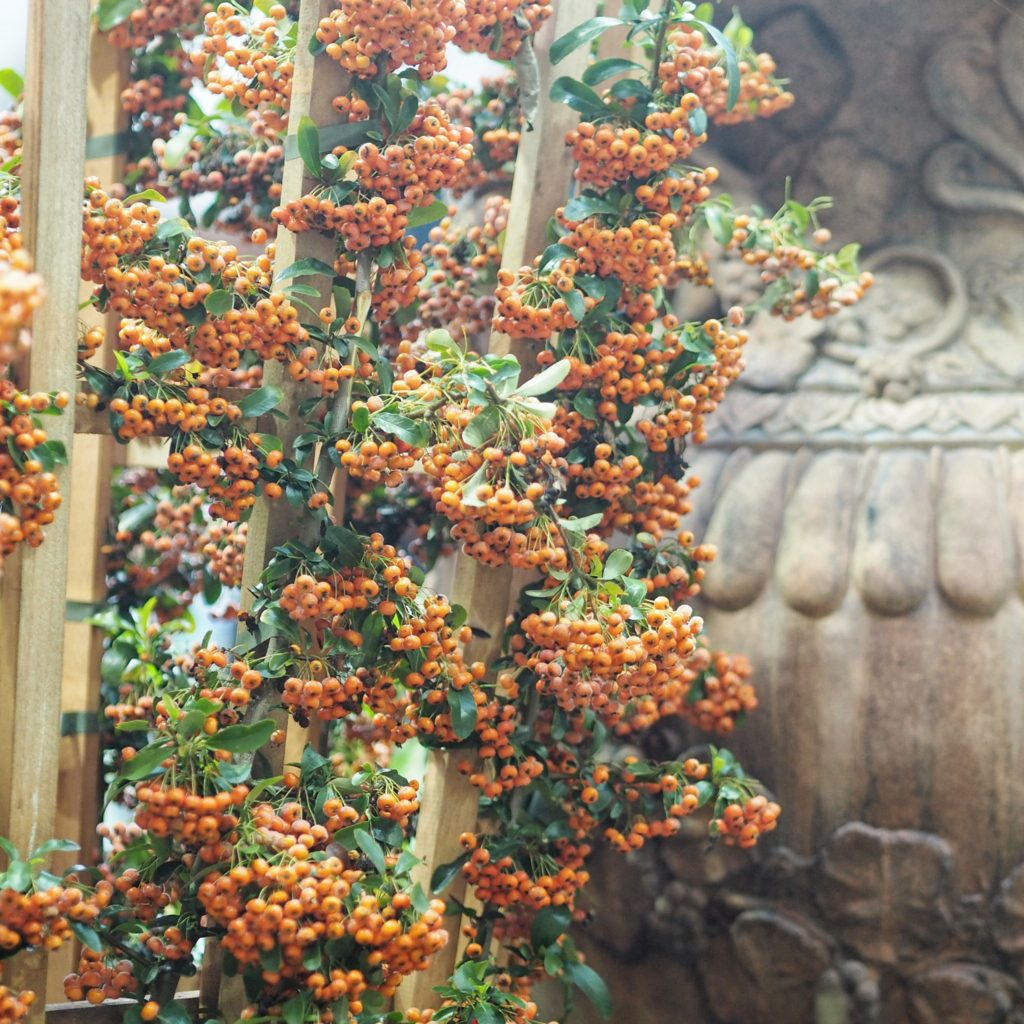 RHS Autumn Show, Things to do in London